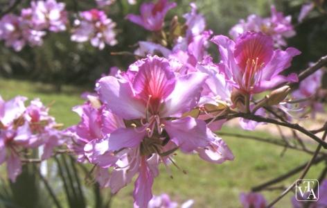 Floraisons du mois de mai