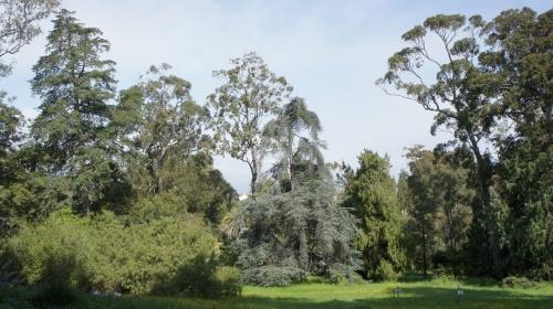 Sécurisation d'arbres emblématiques du Jardin Thuret