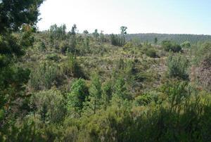 Arboretum du Caneiret_Massif de l'Esterel