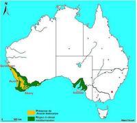 Carte de répartition d'Acacia lasiocarpa