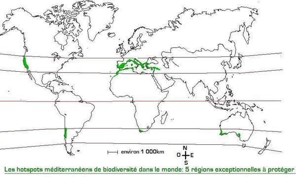 Les zones au climat méditerranéen